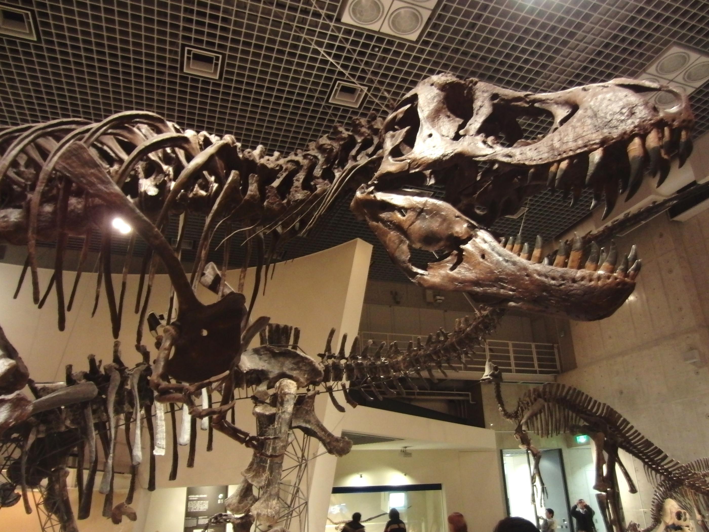 国立科学博物館 - Wikipedia