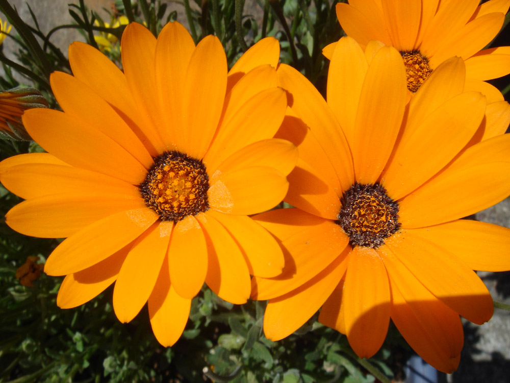Fayl:Unidientified Orange Flowers.jpg - Vikipediya