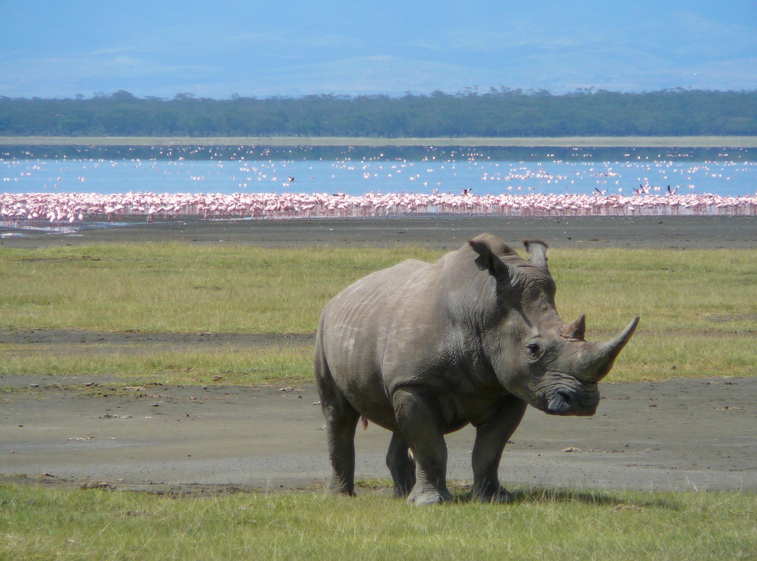 Lake Nakuru- Kenya Africa