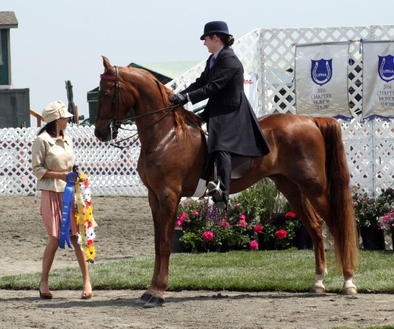 a history of the american saddlebred a horse breed Most popular gaited horse breeds share the american saddlebred is perhaps one of the most popular gaited breeds and a very popular breed overall.