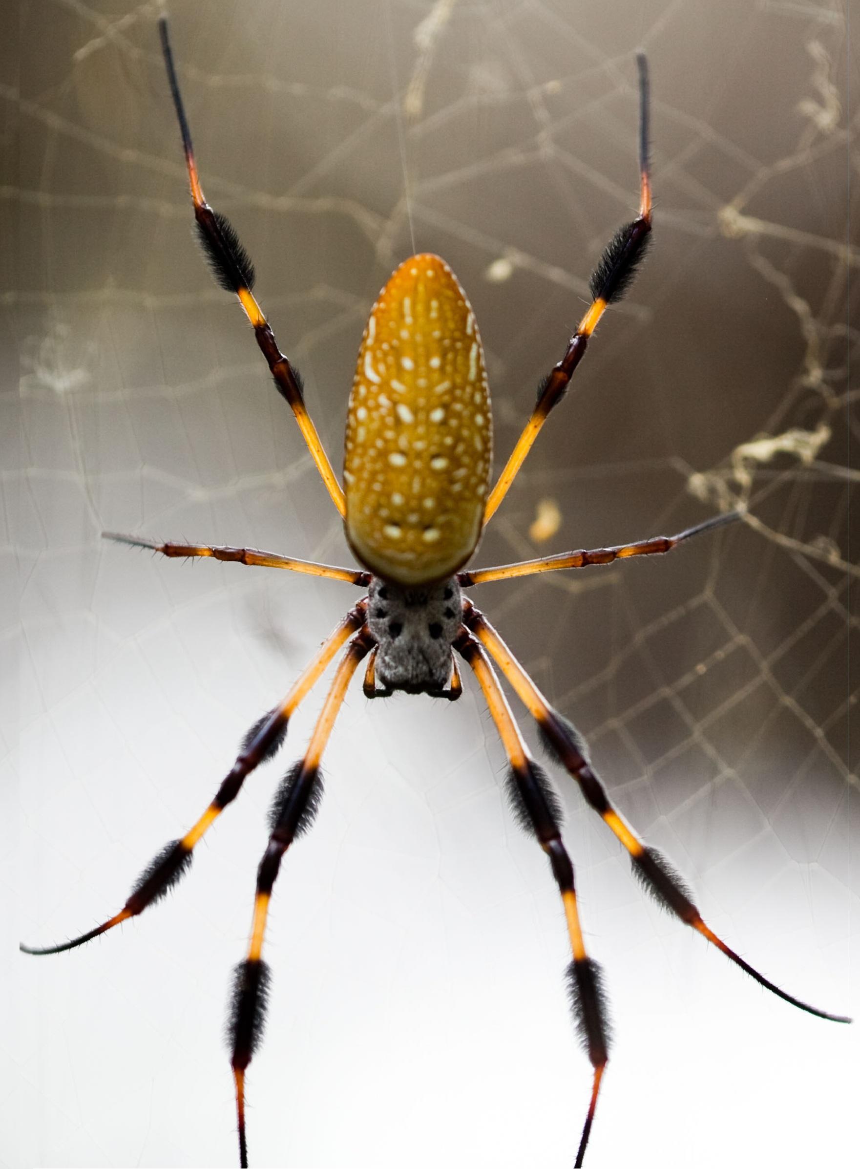 иллюзий банановый паук фото одна деталь, возможно
