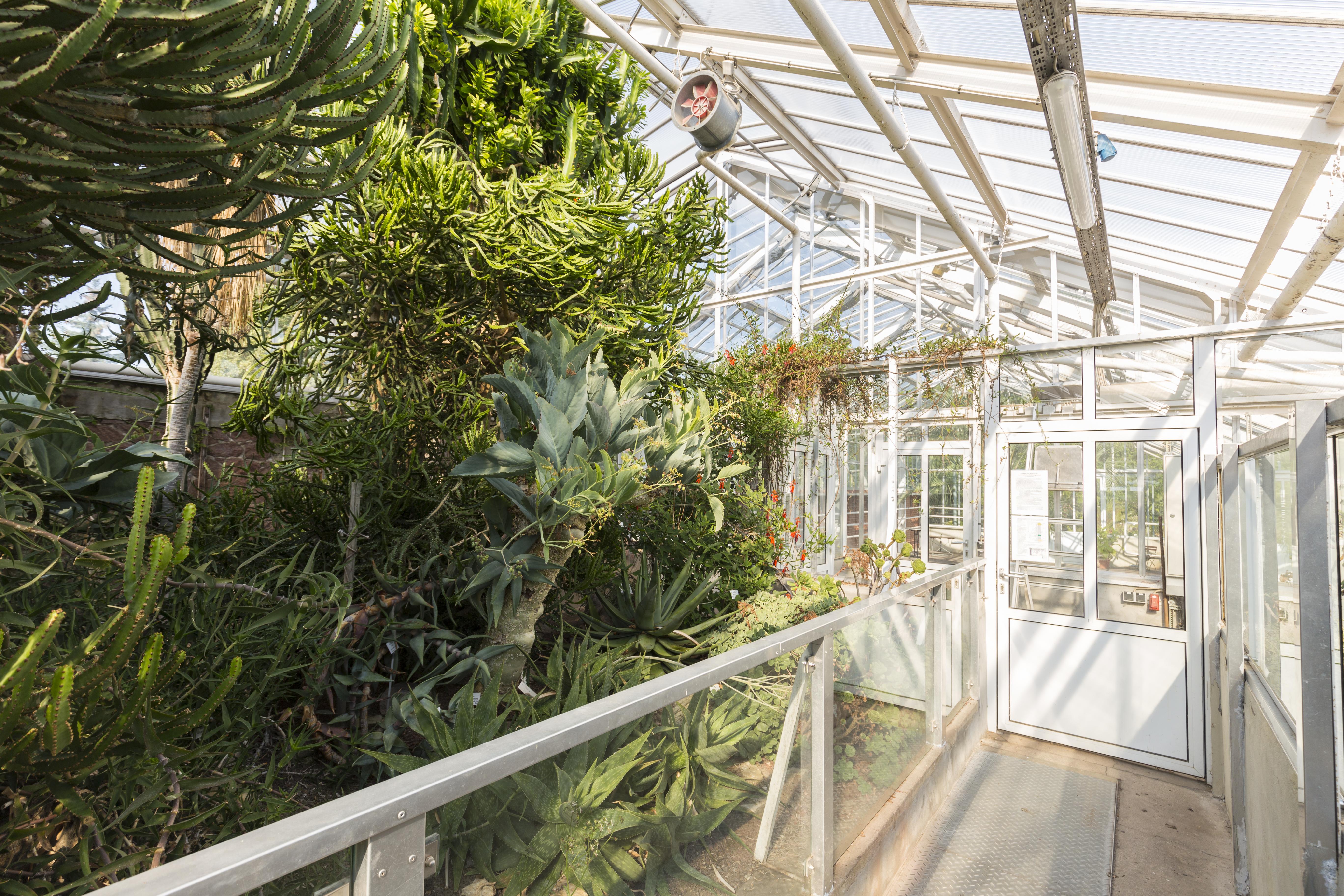 File:Botanischer Garten in Halle Saale - im Sukulentenhaus ...