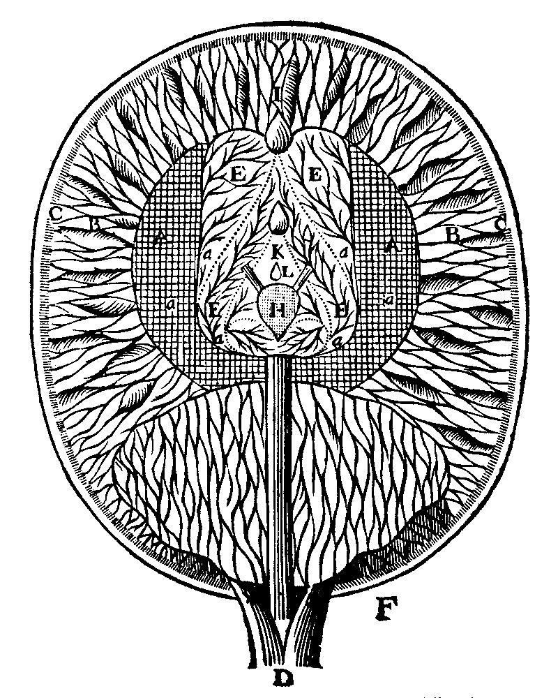 drawing on the work of descartes Literature works by rené descartes rené descartes epistolae 1668-1701 9  bde 1668  more rené descartes principia philosophiae 1692 1692  more.