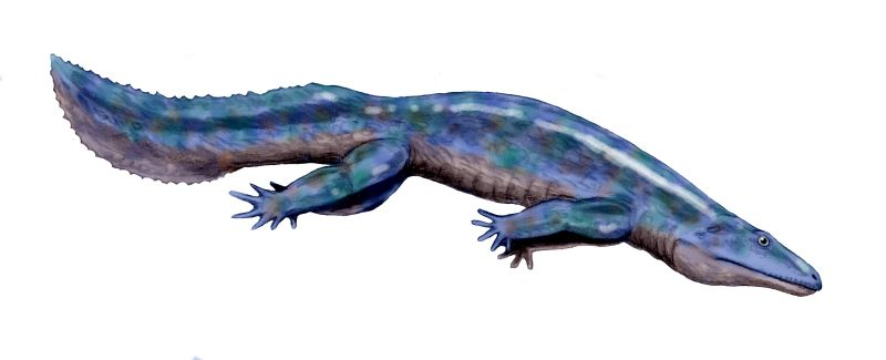 Depiction of Eogyrinidae