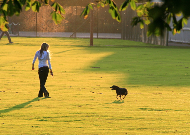 File:Dog walking in West Park - geograph.org.uk - 998126.jpg