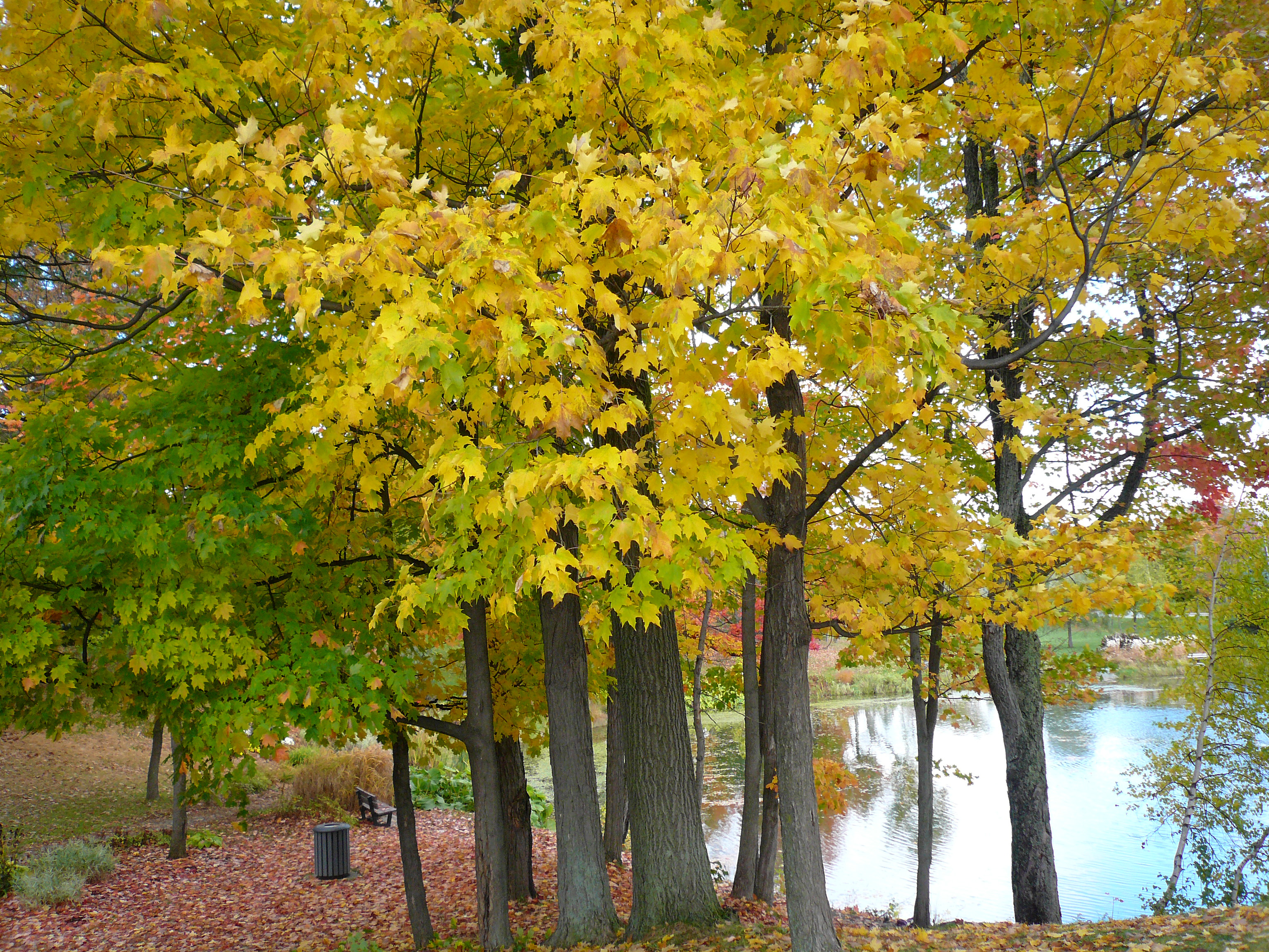 description fall landscape in