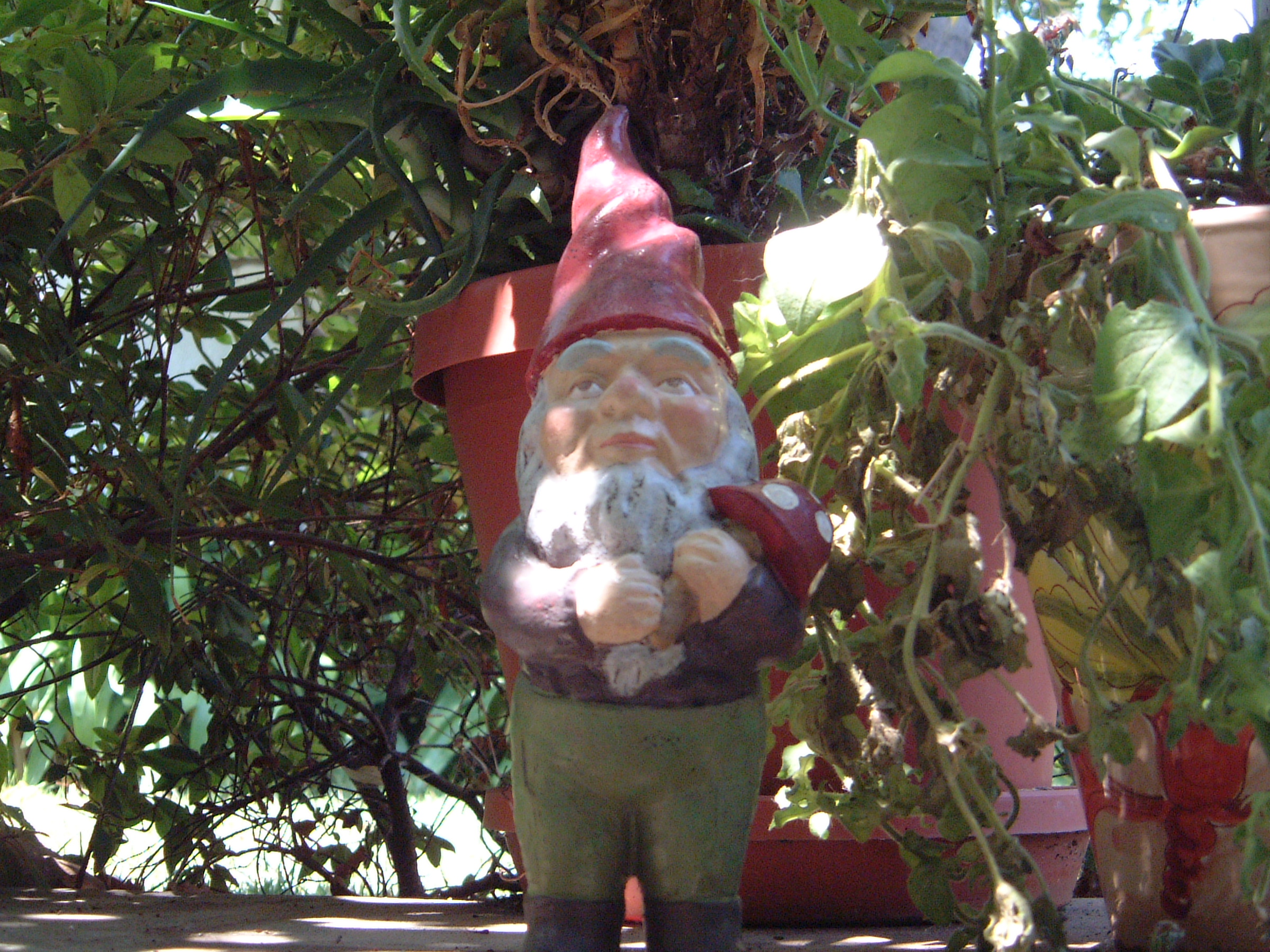 garden gnomes history photograph description garden gnome jpg