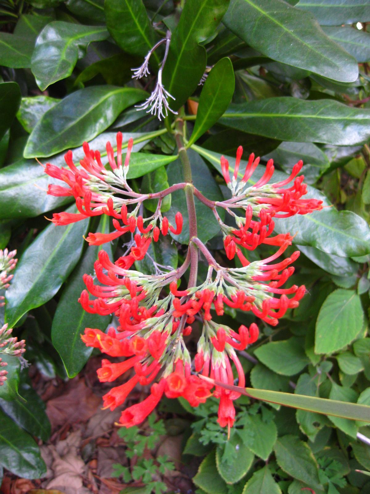 Mildred E Mathias Botanical Garden Wikiwand