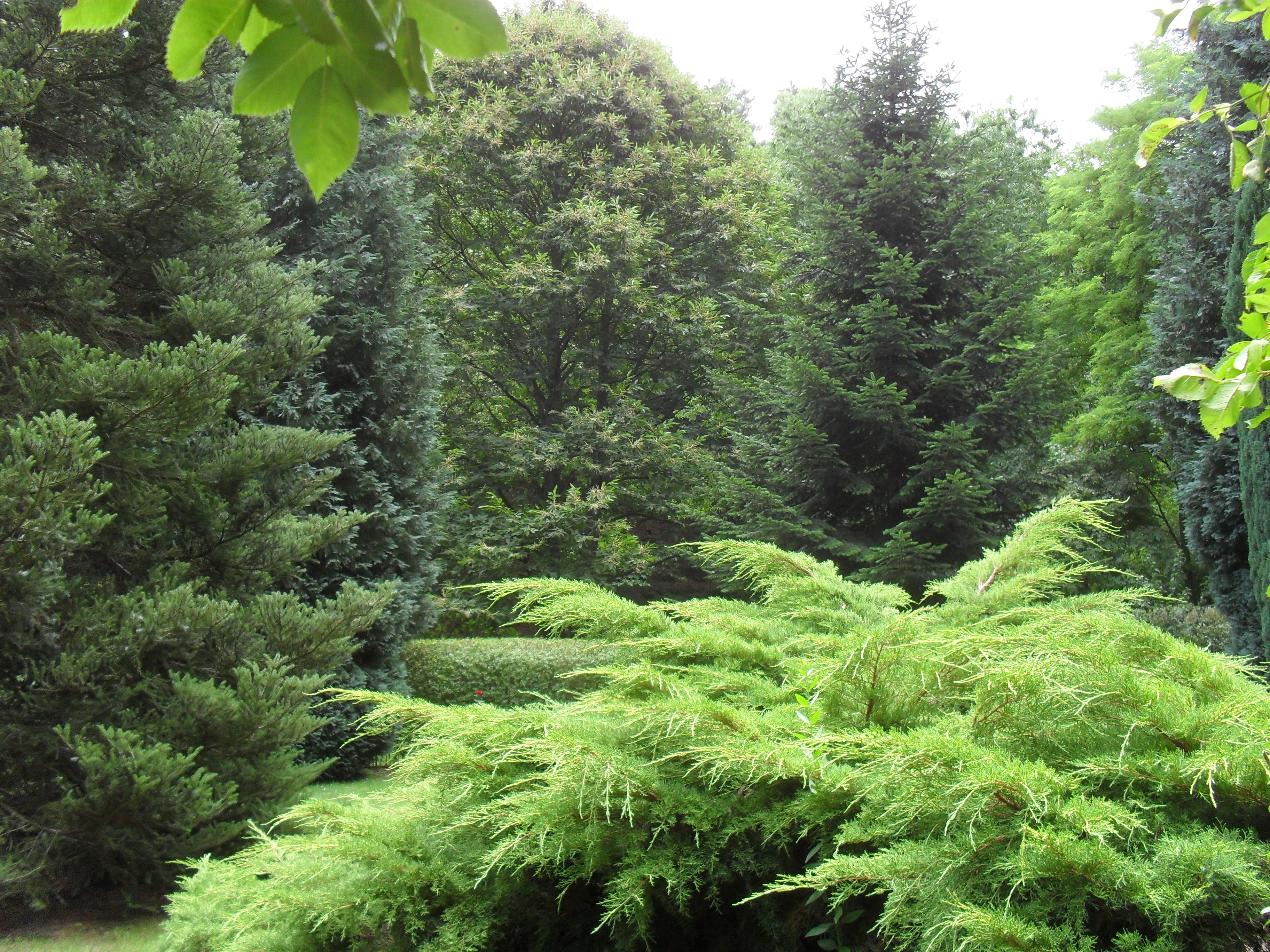 Datei garten mit wikipedia for Gartengestaltung thuja