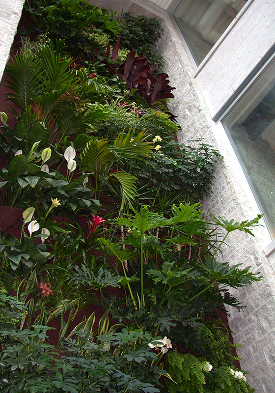 Three-story-tall biowall in Queens Universitys Faculty of Applied Science building Beamish-Munro Hall in Kingston Ontario, Canada. Constructed in 2003, the wall is composed of tropical plants to help clean and humidify the buildings air. Photo by Renée Stephen, 2005.