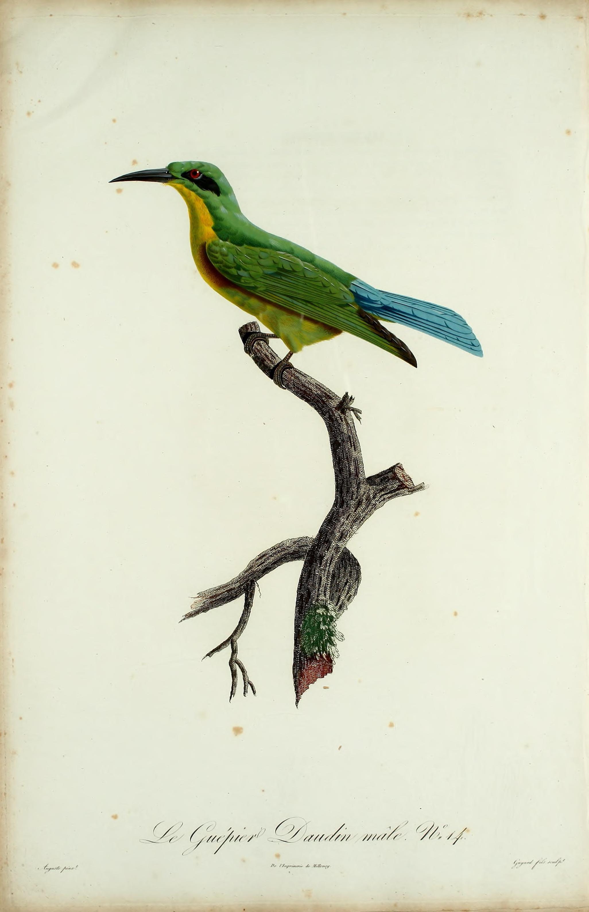 Datei histoire naturelle des promerops et des gu piers Histoire des jardins wikipedia