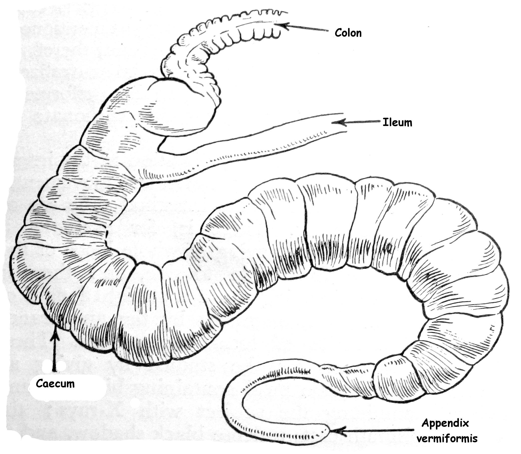 Anatomy Of Human Body Parts Com
