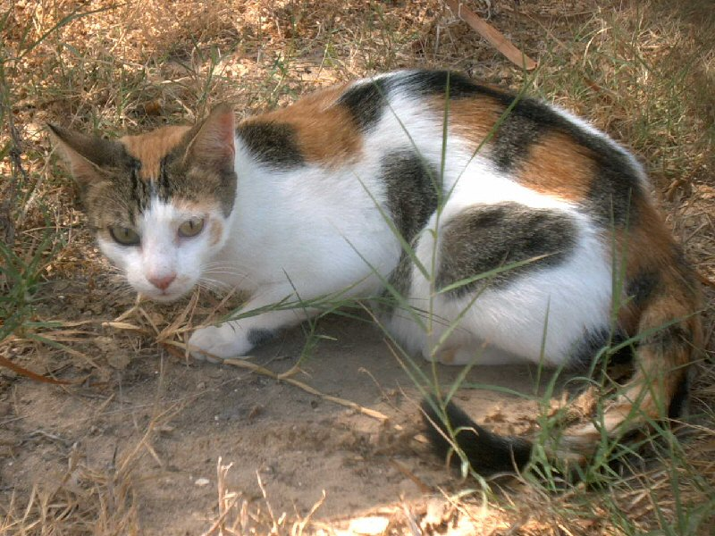 Image:Katze in Tunesien.jpg
