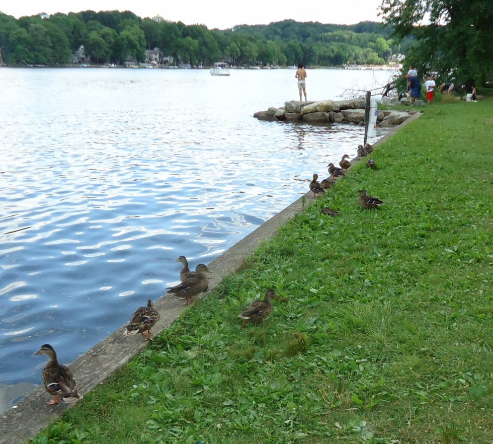 File lake hopatcong state park nj ducks and fishing area for Lake hopatcong fishing