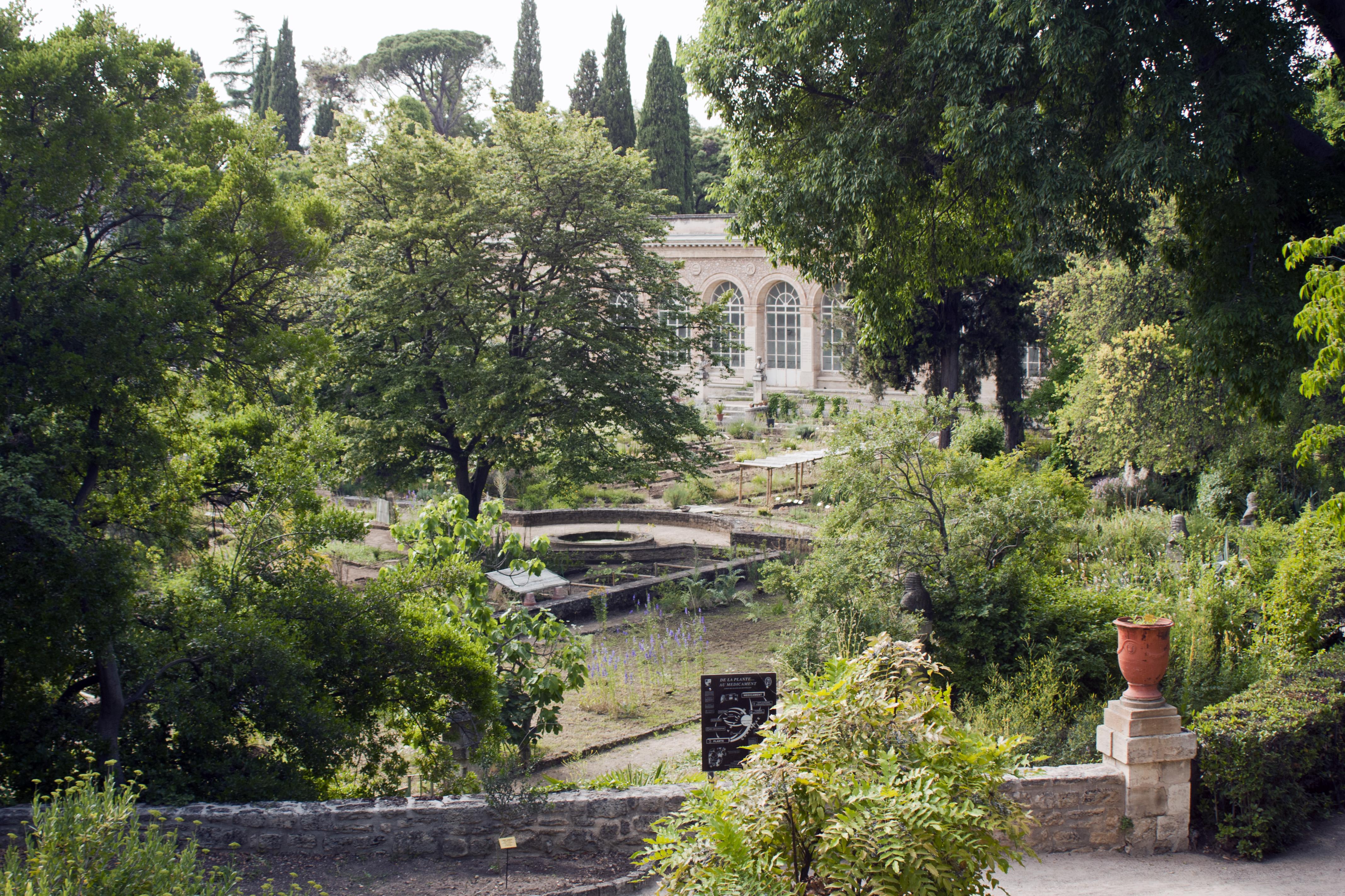 File montpellier facult de m decine jardins des plantes for Jardins des plantes