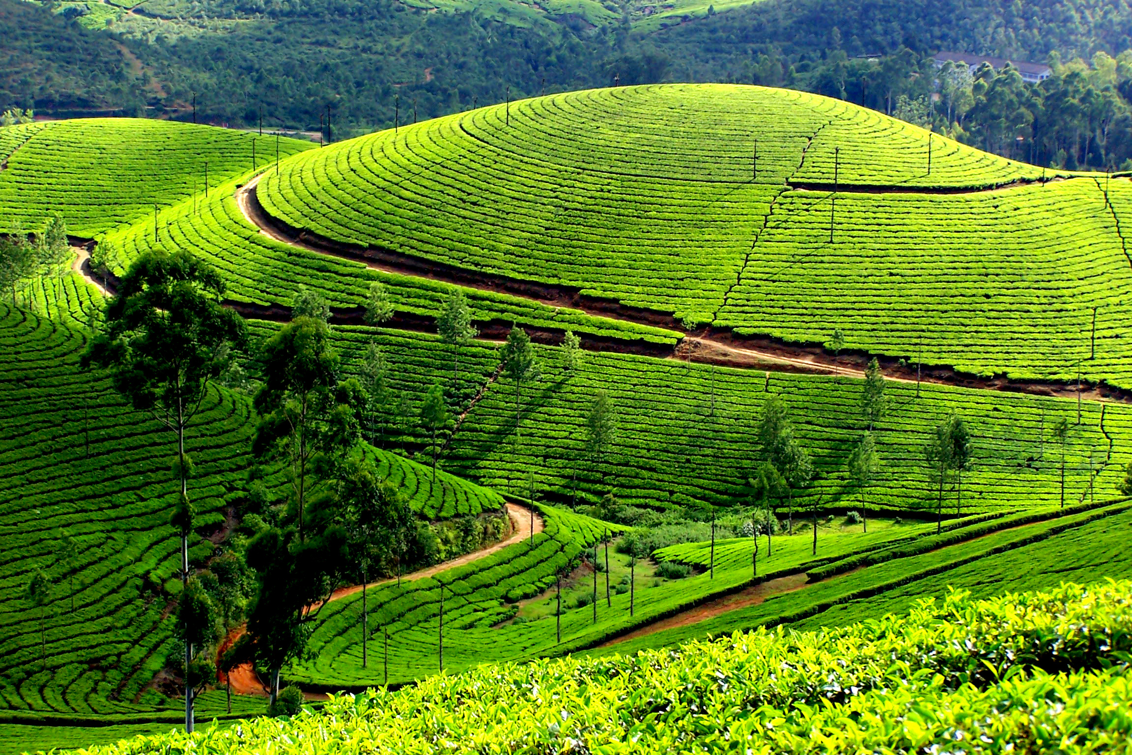 File:Munnar66.jpg - Wikimedia Commons