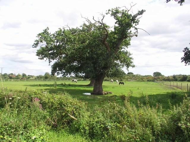Pasture at Parley Green - geograph.org.uk - 509237