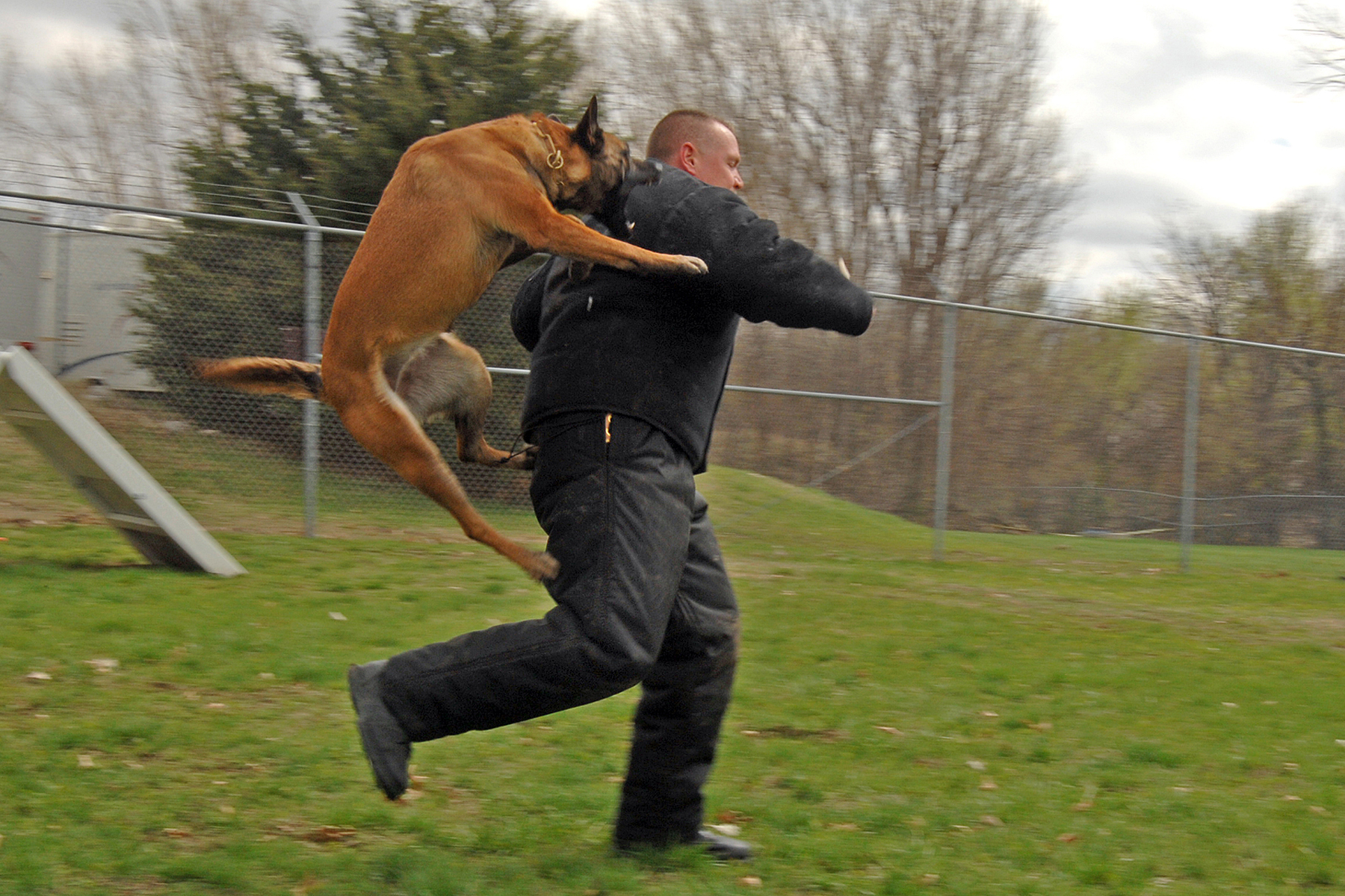 Datoteka police dog attack jpg