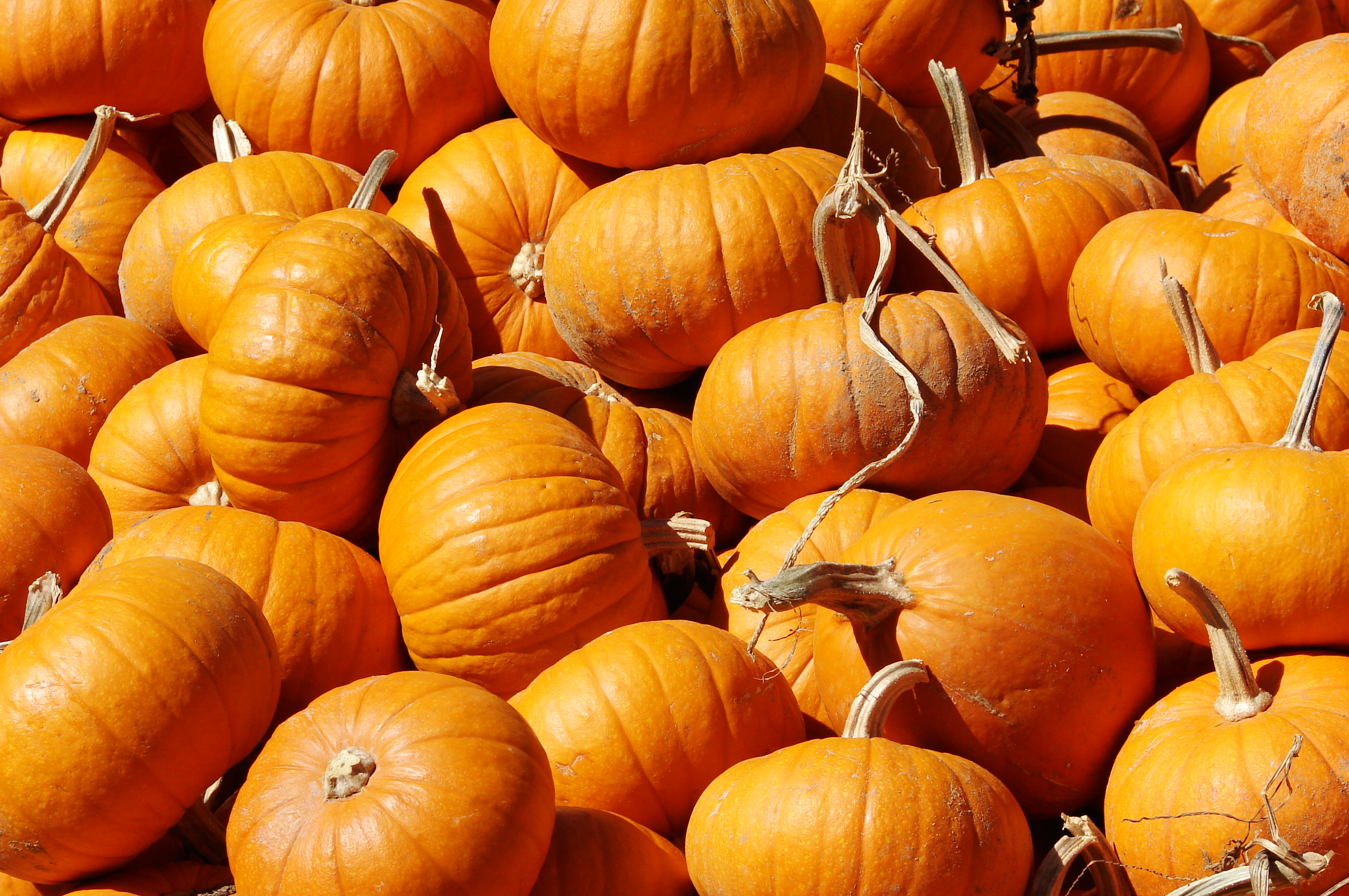 Pumpkins For Sale at the Hunter Farm This Year! – Wedgwood ...