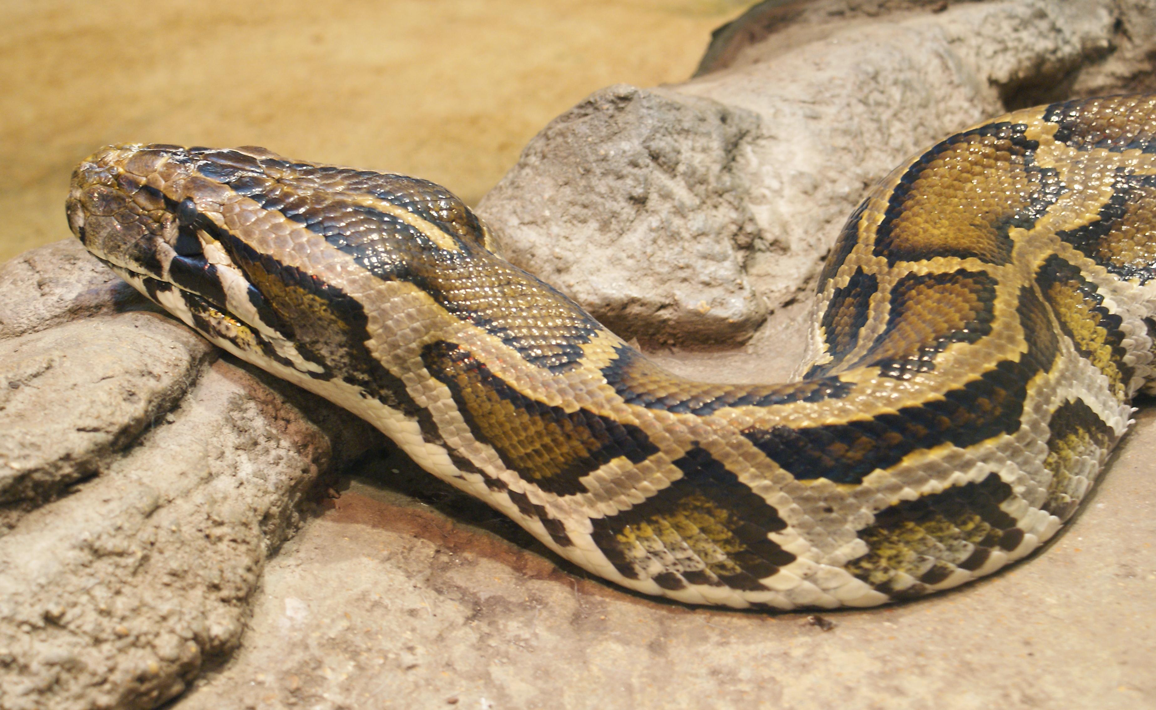 Python Wikipedia