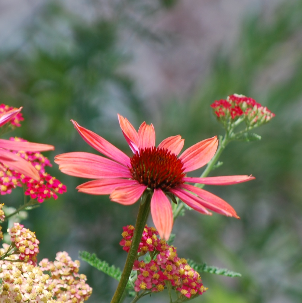 bloem - Wiktionary