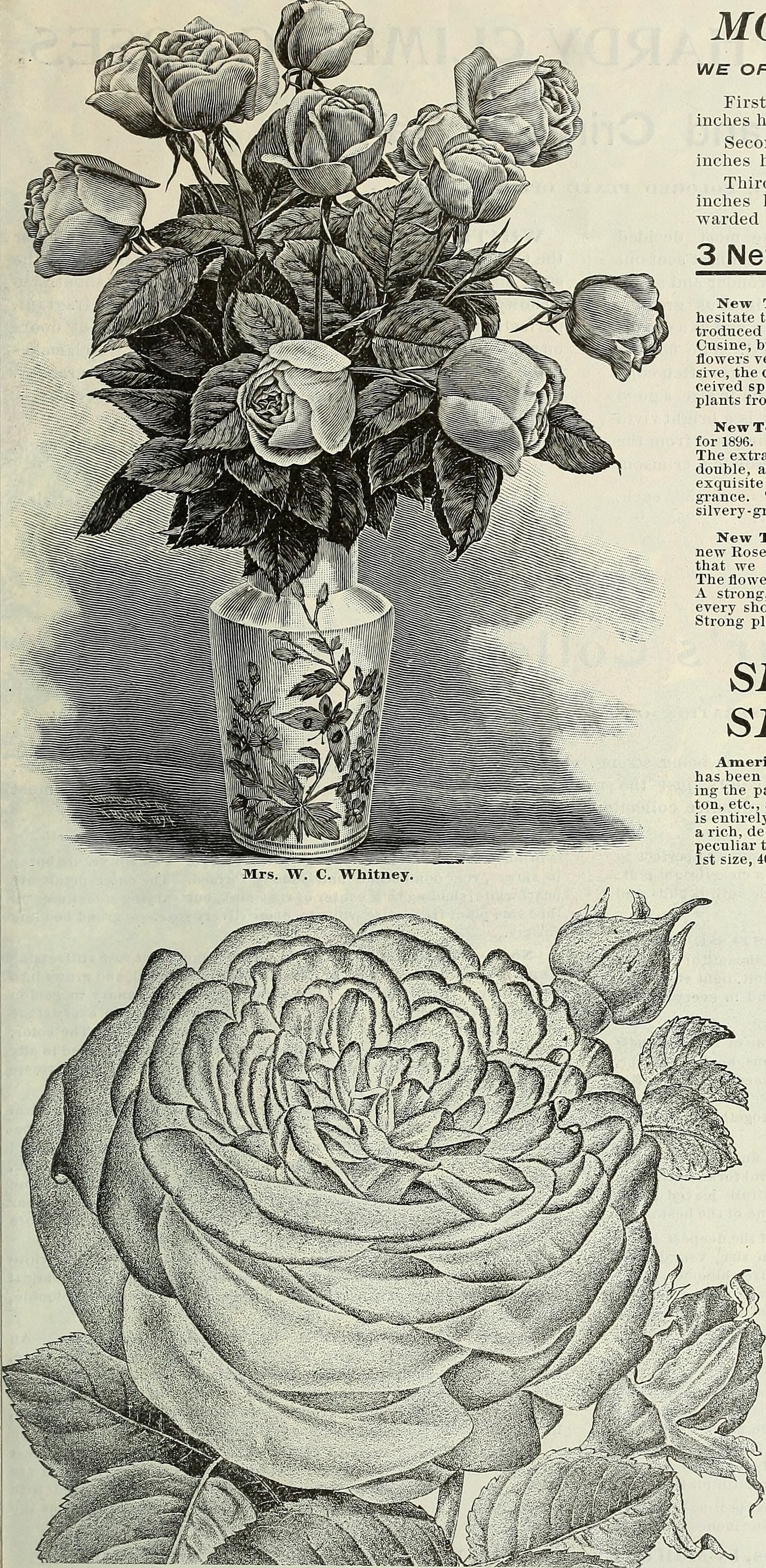 File Spring Catalogue Roses Plants Seeds 1896 19923057274