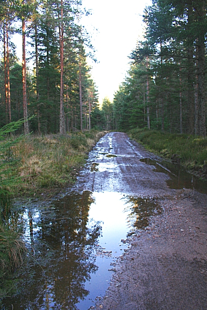 Teindland Forest This stretch of forest road is uncharacteristically wet - usually they are better drained.