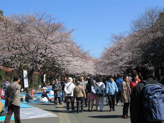 Ficheiro:UenoPark Hanami.jpg