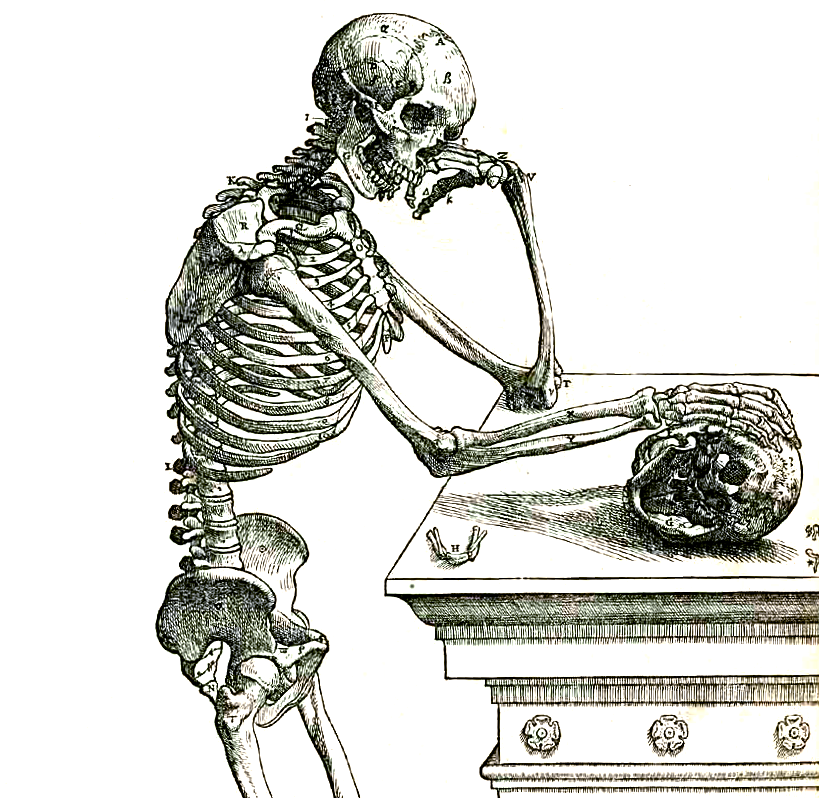 Vesalius 164frc small cropped.png