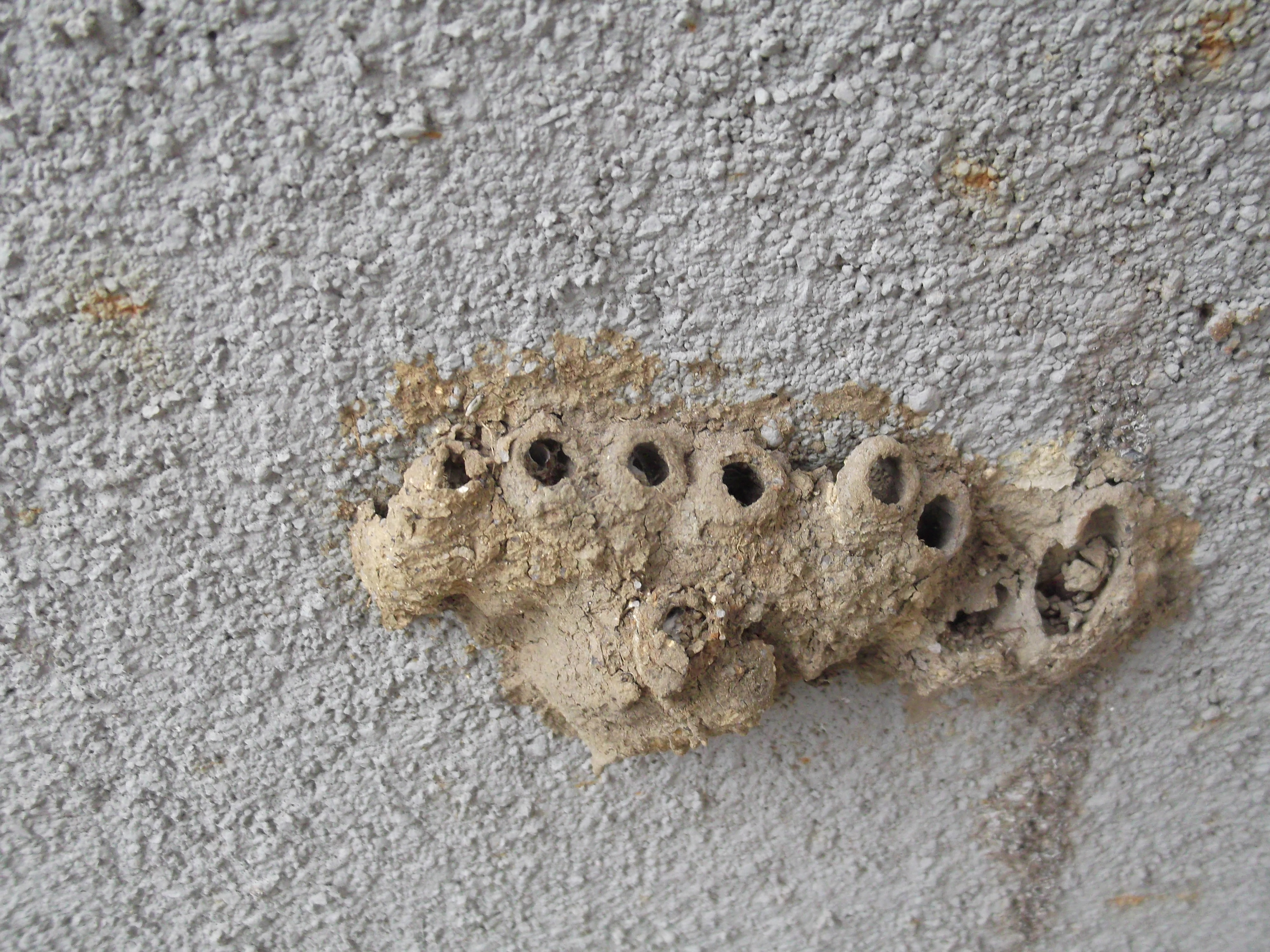file wasp nest 2 yercaud salem india jpg wikimedia commons