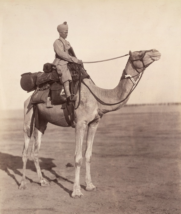 A sowar of the Bikaner Camel Corps on his mount showing details of kit.jpg