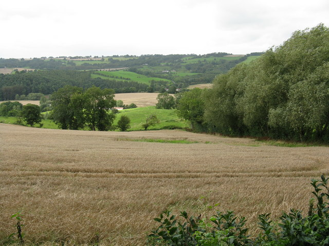 Battered wheat - geograph.org.uk - 958974