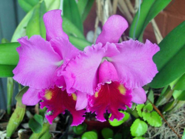 Ficheiro:Blc turambeat-flores.jpg