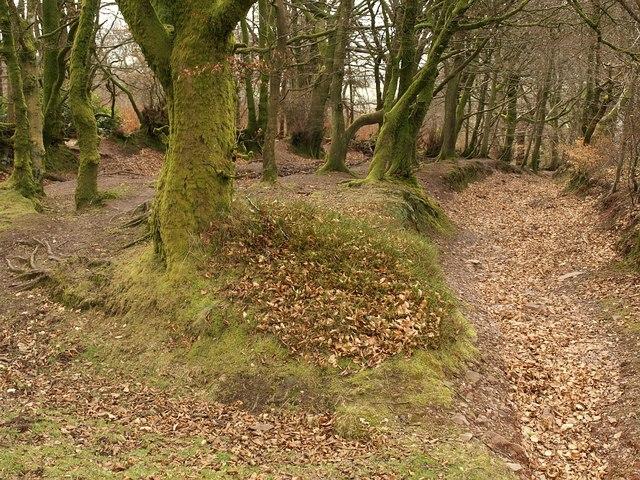Bridleway on Bagborough Hill - geograph.org.uk - 1188027