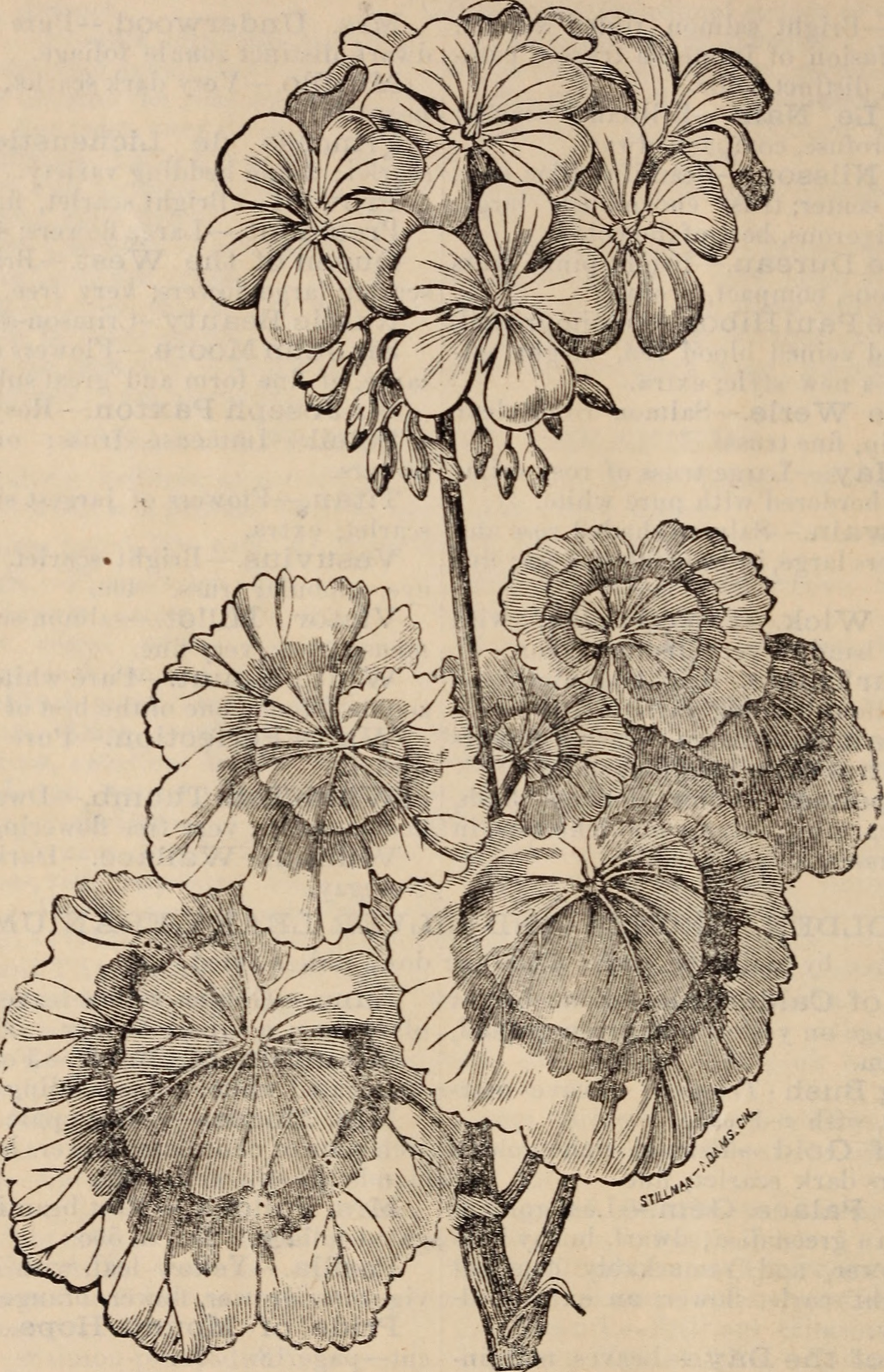 Catalogue Of New And Rare Plants