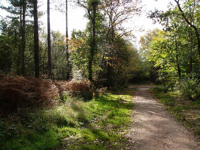 Creech Woods - geograph.org.uk - 1021891