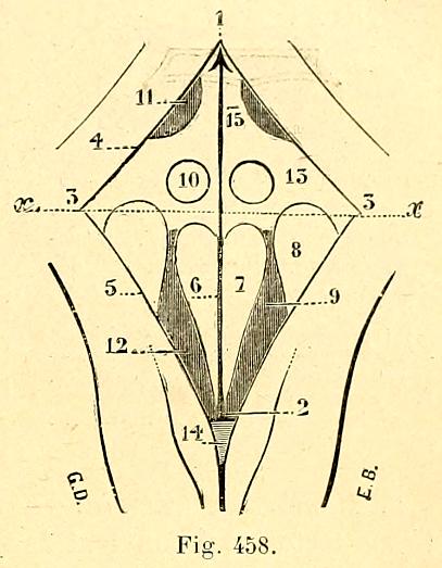 File:Cuarto ventrículo.png - Wikimedia Commons