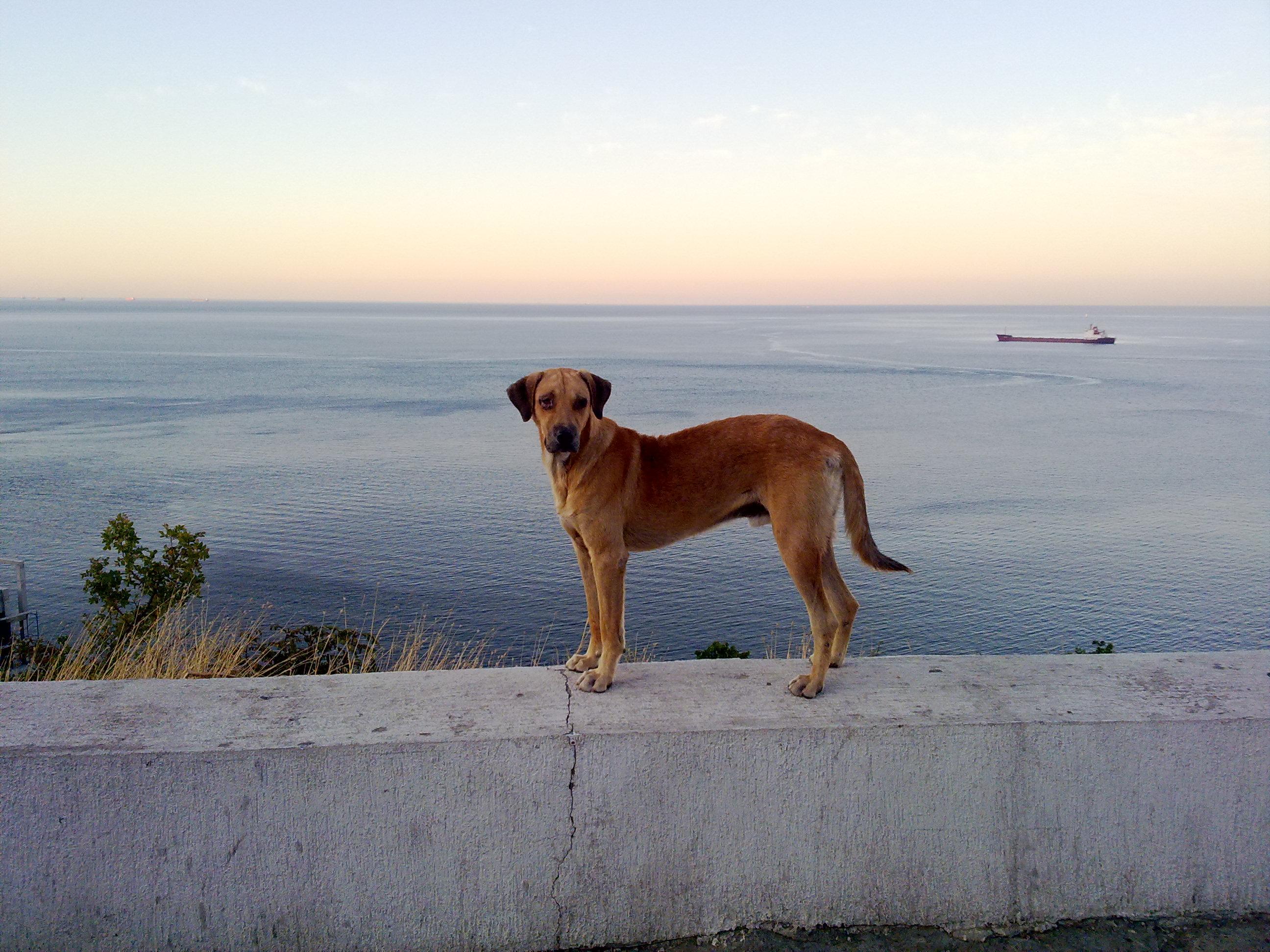 The Works Dog Grooming Ocala Fl