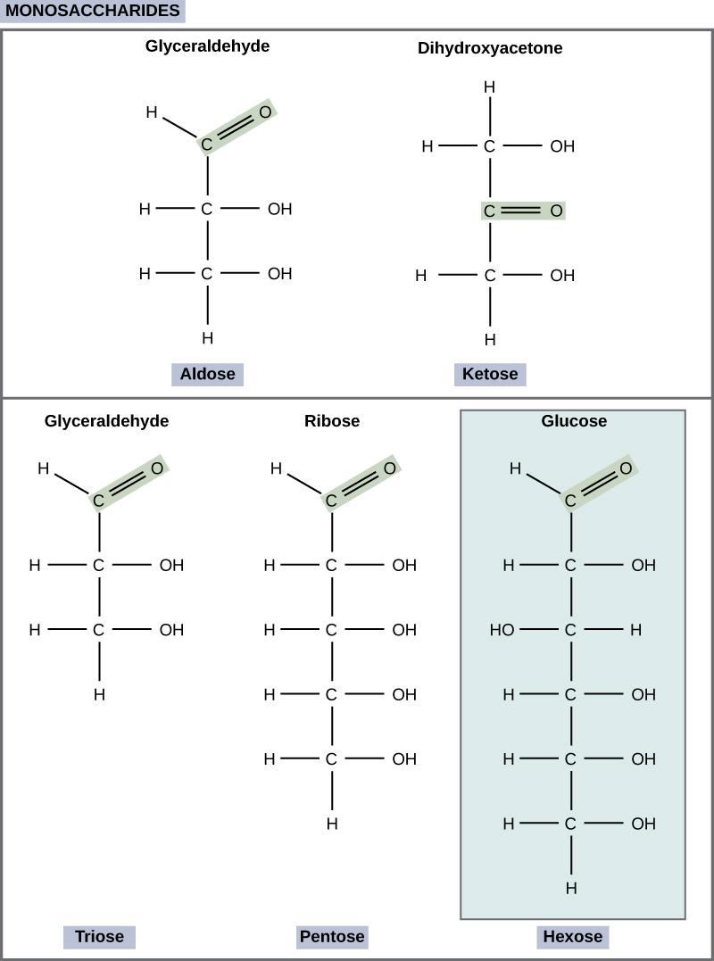 Glucose Level Chart: Figure 03 02 01.jpg - Wikimedia Commons,Chart