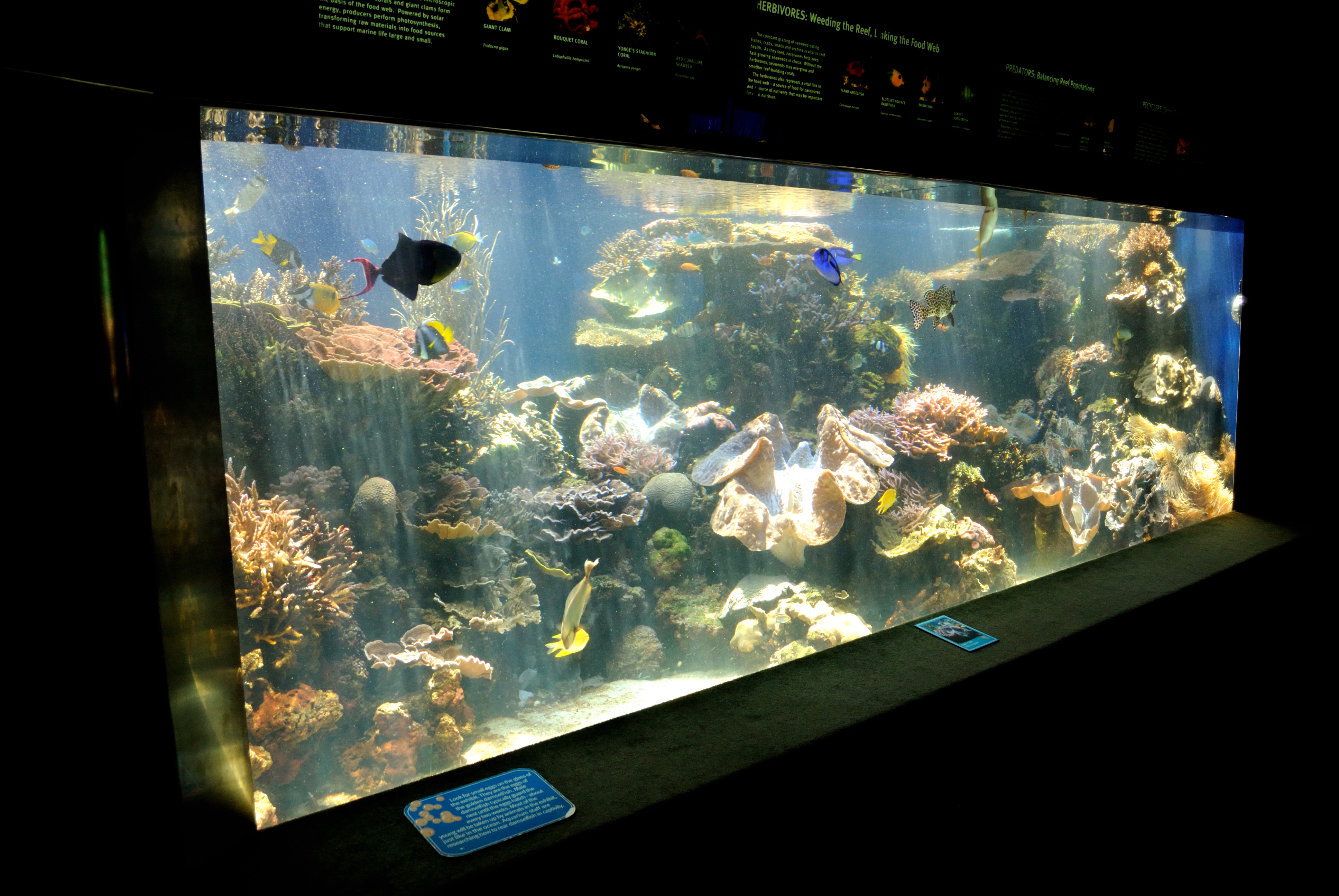 Aquarium fish tank sizes - File Fish Tank Honolulu Aquarium 4671604664 Jpg