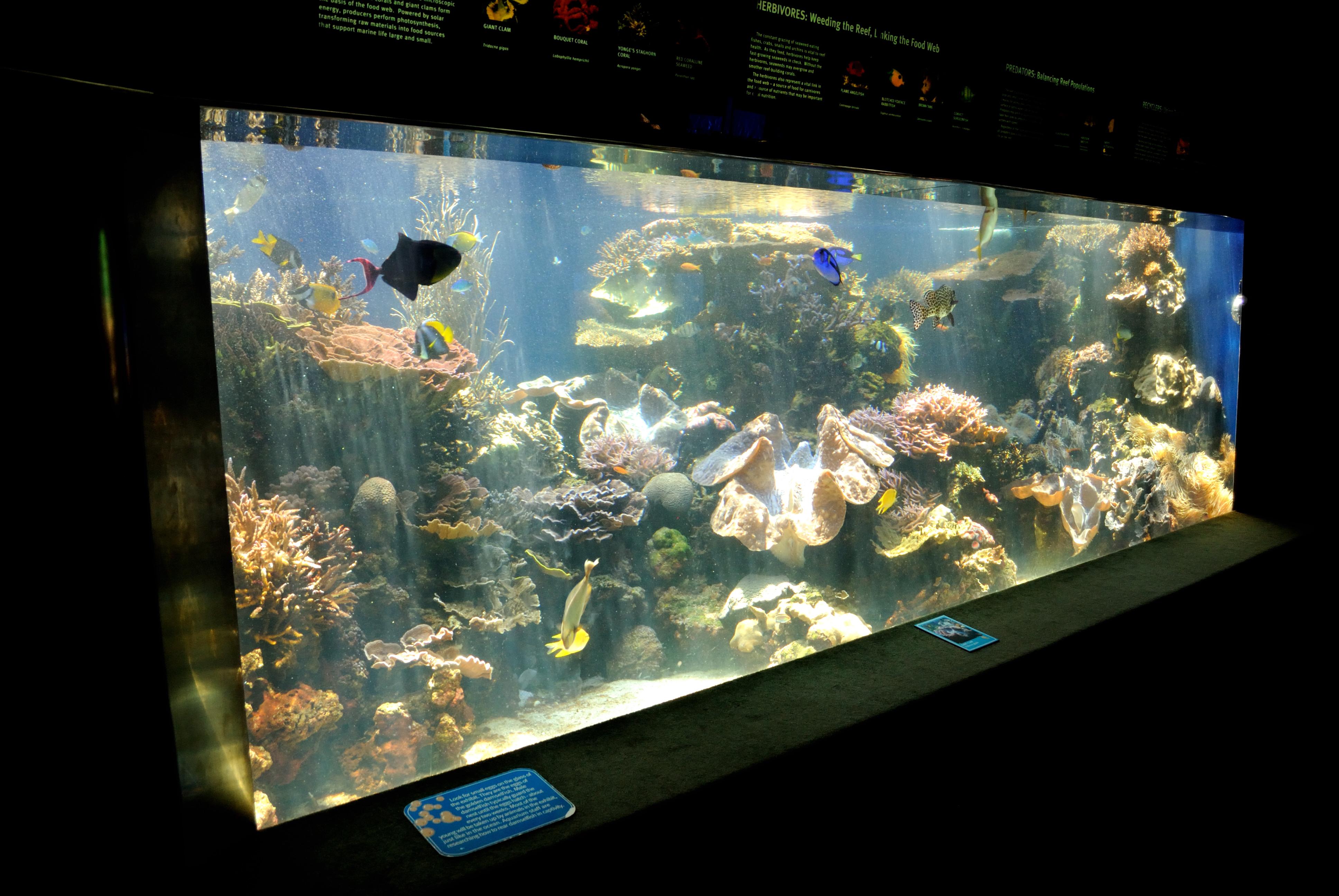 Description Fish Tank @ Honolulu Aquarium (4671604664).jpg