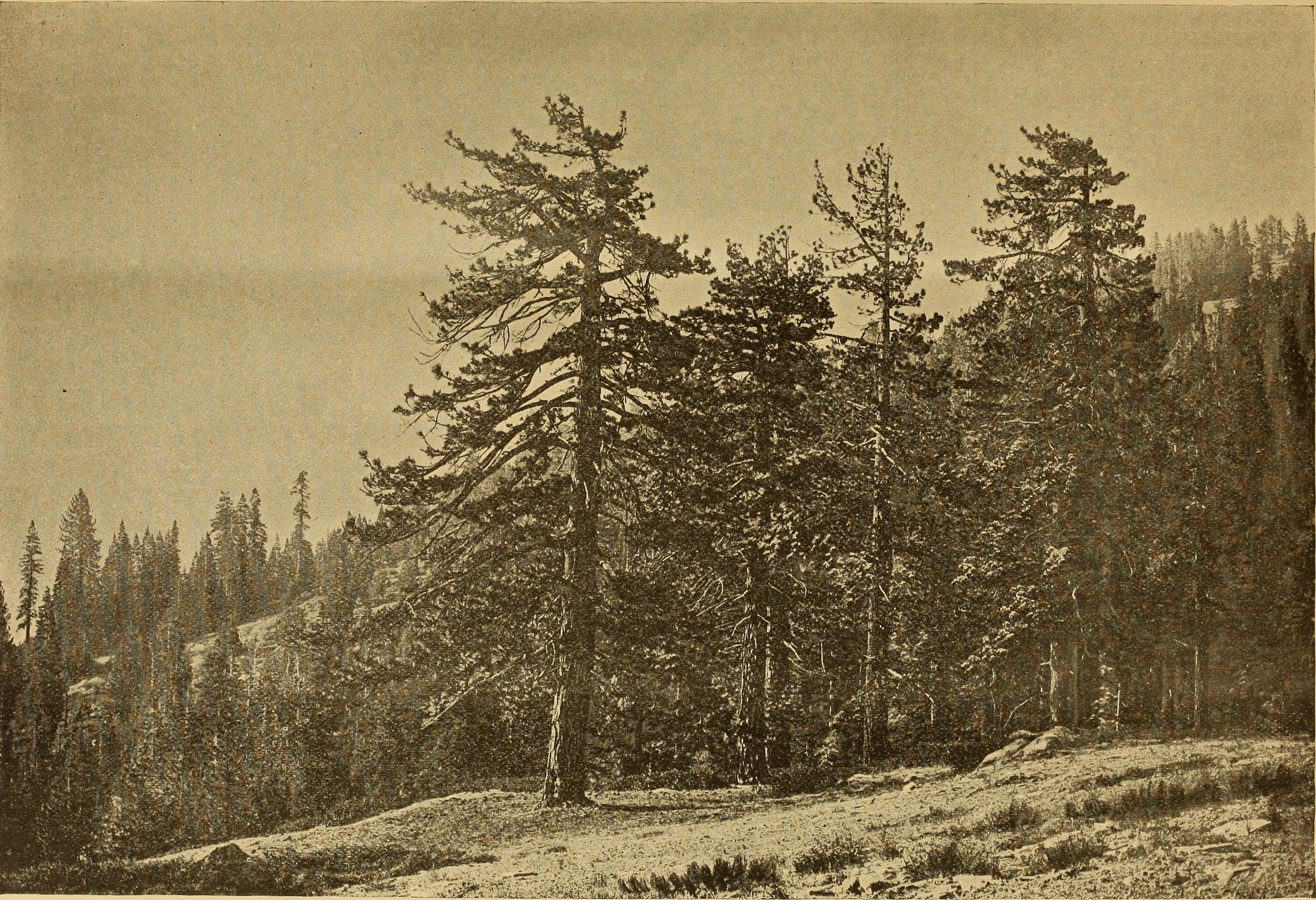 File:Garden and forest; a journal of horticulture, landscape art and ...