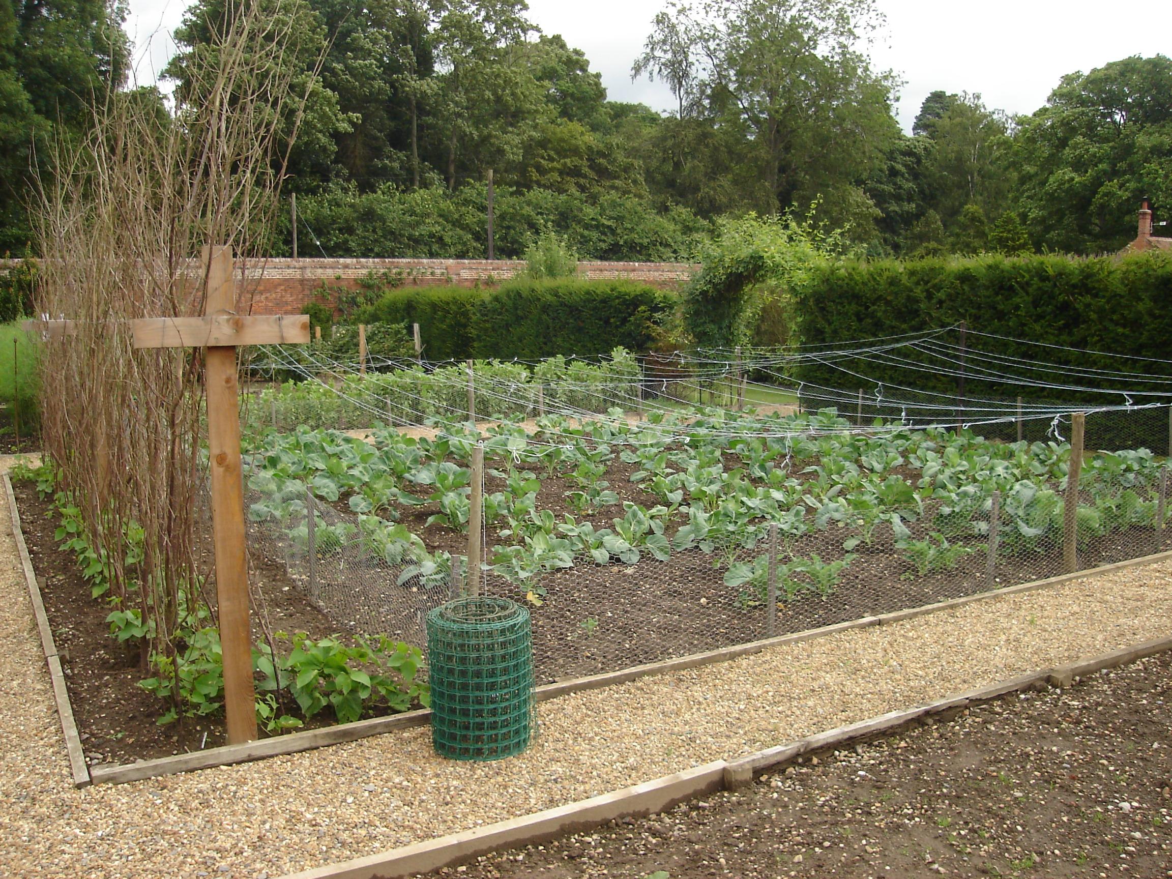 Image result for vegetable gardens