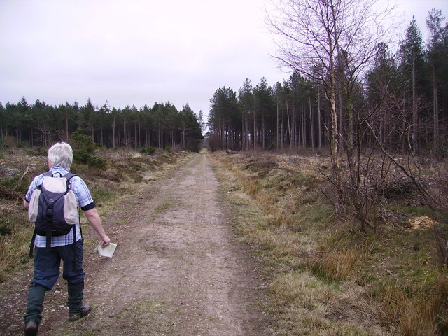 In Broxa Forest - geograph.org.uk - 387826