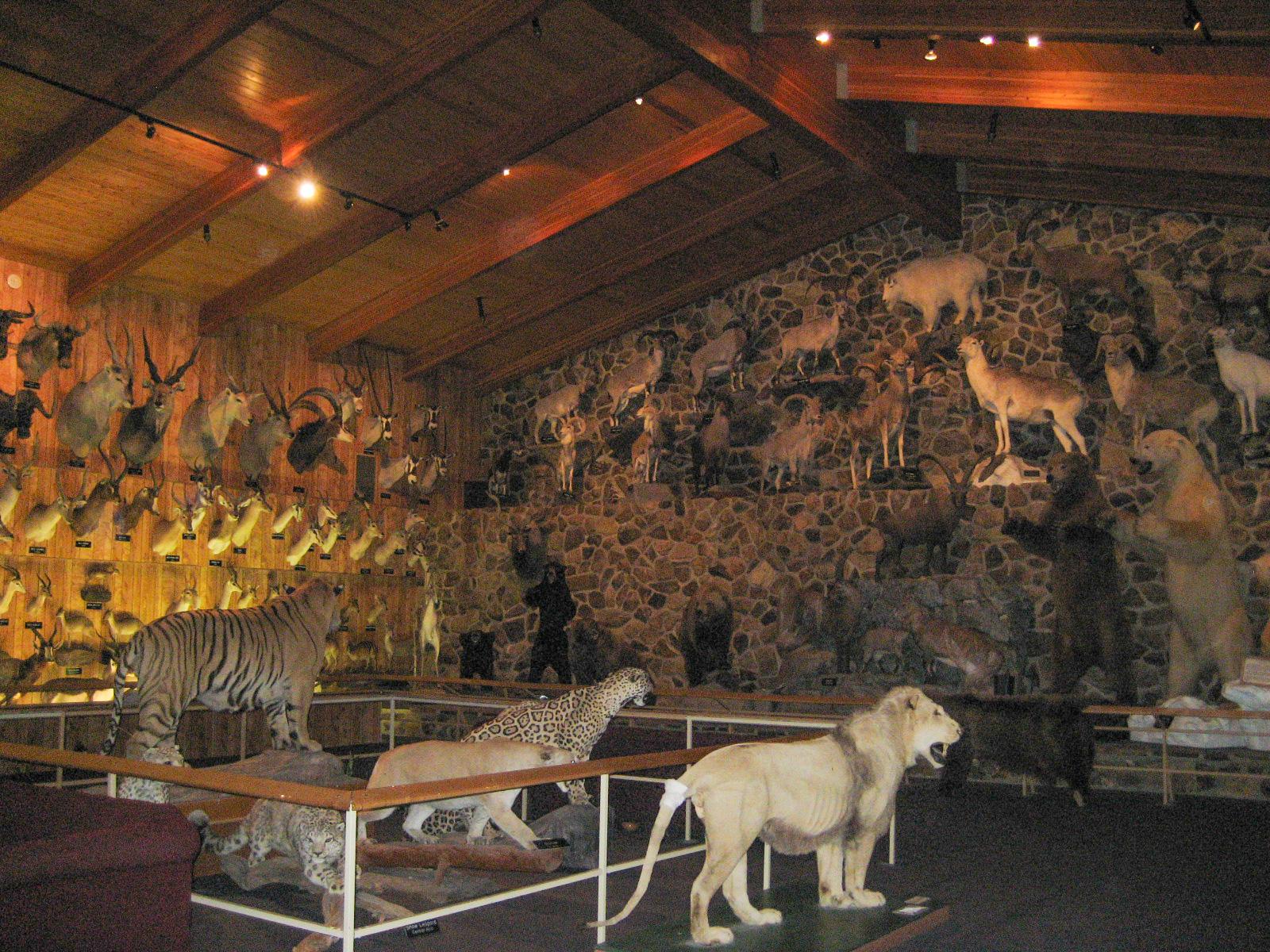 File International Wildlife Museum Tucson Jpg Wikimedia