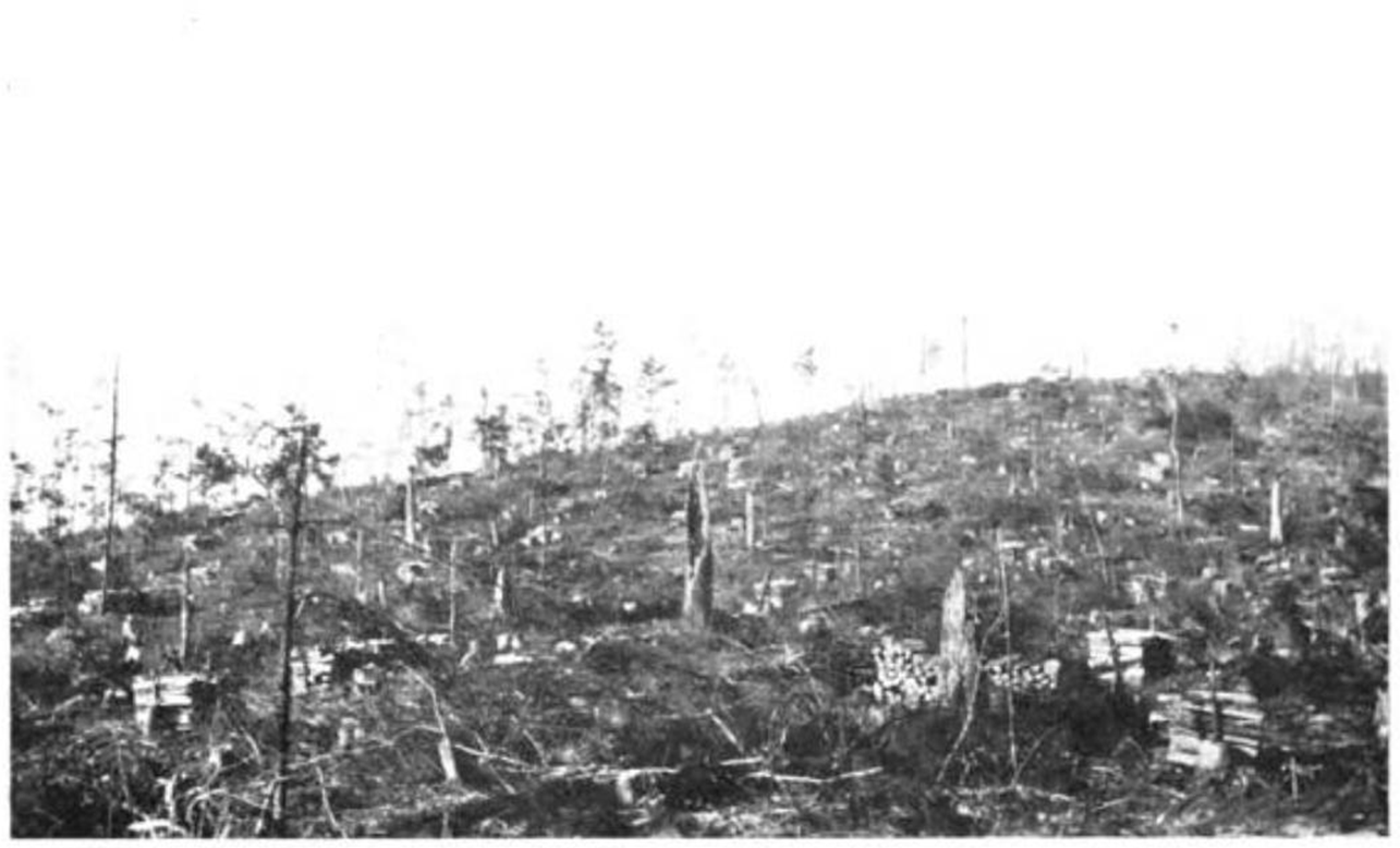 Help! Does anyone know how much timber was being harvested during the Industrial Revolution?