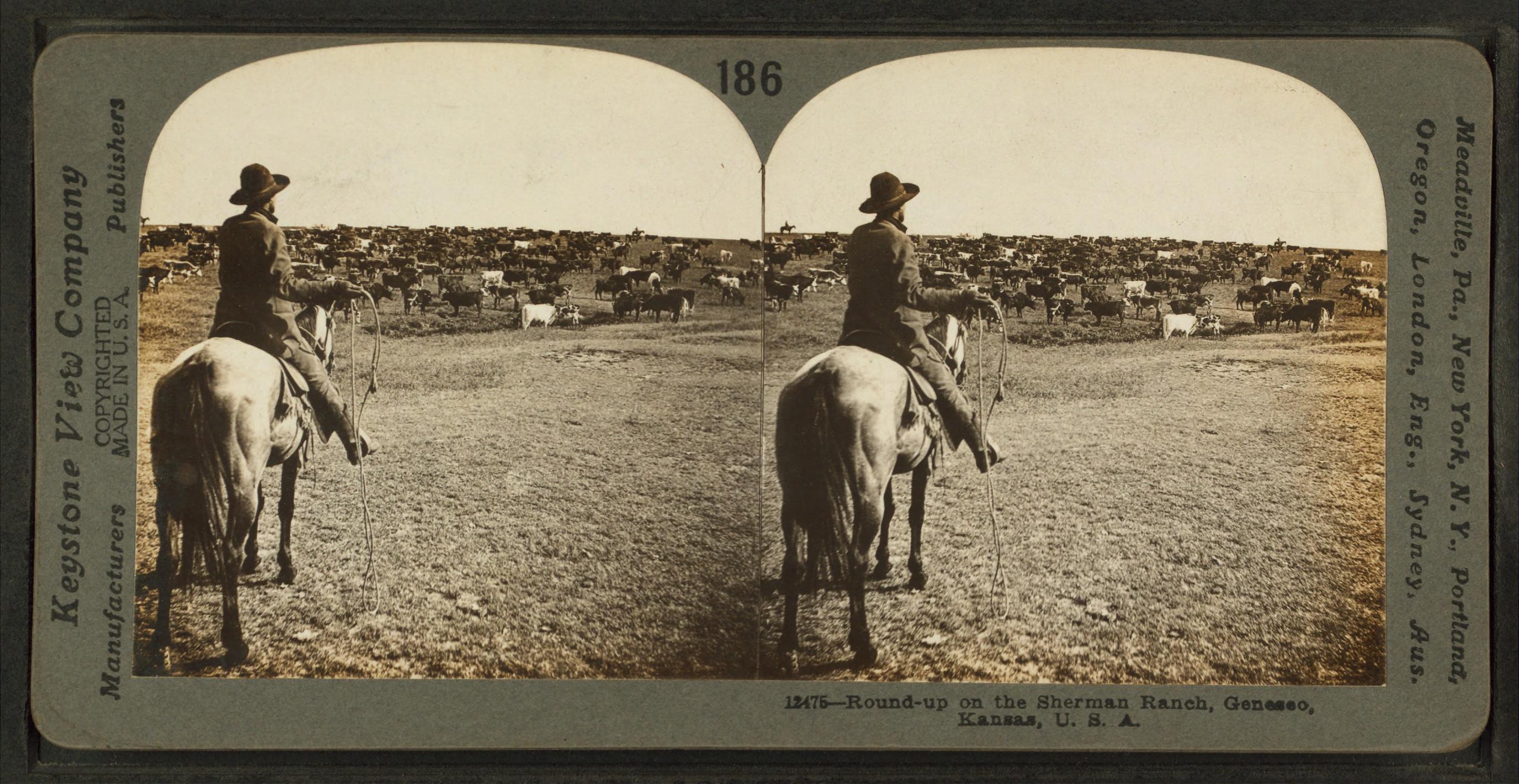 Round-up on the Sherman ranch, Geneseo, Kansas, U.S.A, by Keystone View Company.jpg