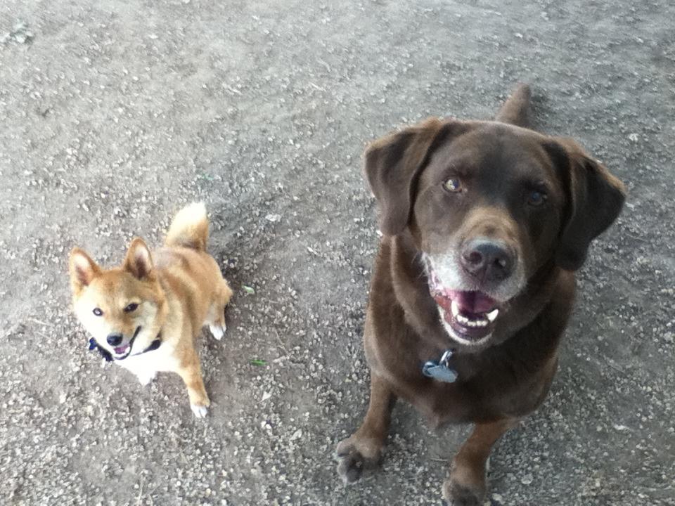 Dog Park In Long Beach Ny