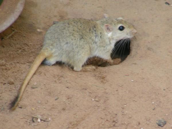 List of mammals of Iran