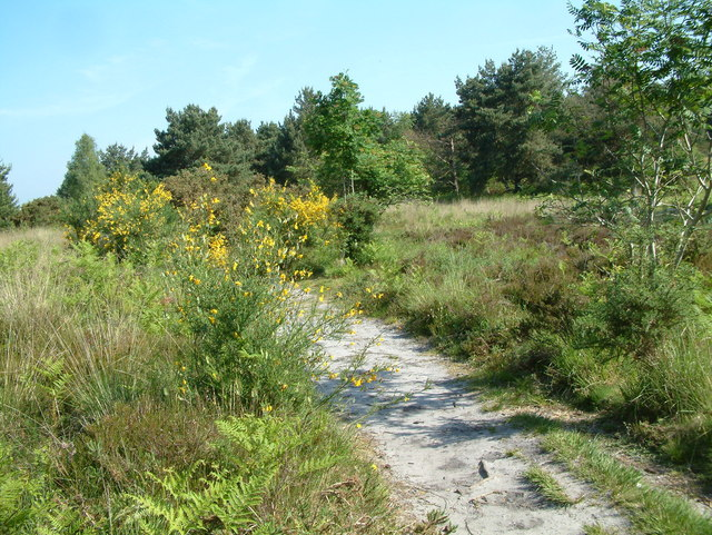 Avon Heath Country Park, Dorset - geograph.org.uk - 181310